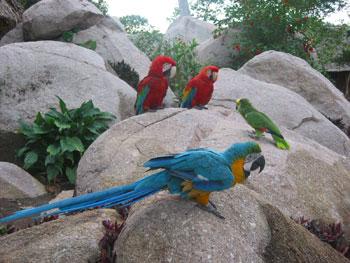 غابات الأمازون Perroquet